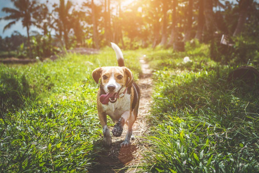 Ein Hund wedelt mit dem Schwanz